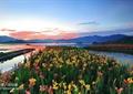 湖水景观,水上花池,花池花坛