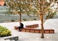 休闲广场,坐凳,树池,地灯