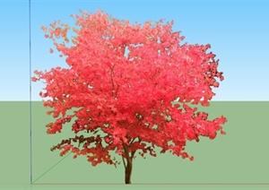 日本红枫树SU(草图大师)模型
