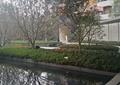 中庭景观,种植池,水池,长廊