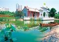 莲花池,水池景观,莲花,小船