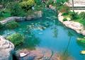 小溪景观,水渠,石头,假山