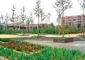 方形树池,种植池