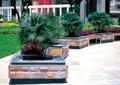 方形树池,树池坐凳