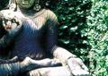 佛像雕塑,植物墙