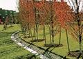 草坪景观,阳光草坪,排水沟