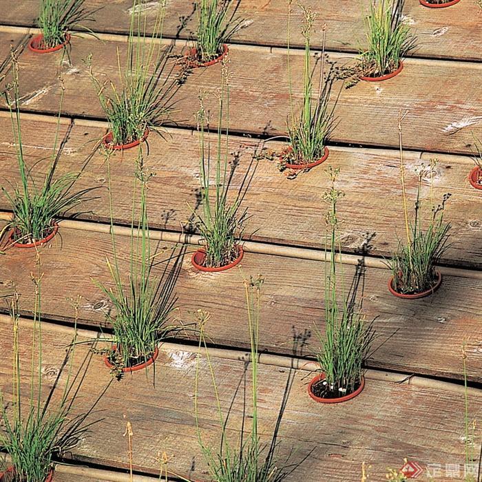 木板铺装,地面素材,盆栽,盆栽植物
