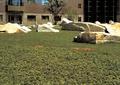 自然石,自然景石,景石石头,草坪