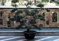 景墙设计,镂空景墙,花钵,盆栽