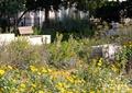 公园,公园景观,花园