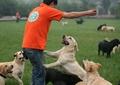 狗,草坪,养狗基地