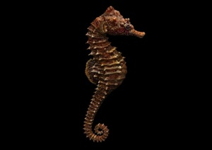 海马雕塑设计3D模型