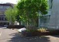 树池,防腐木铺地