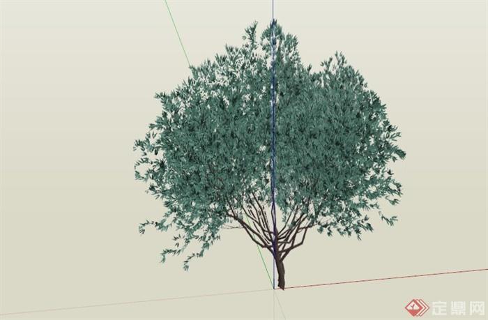 常见景观树植物SU模型库(1)