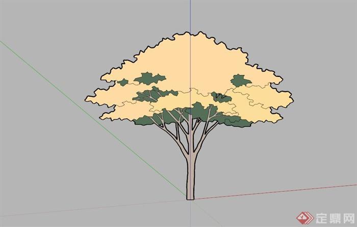 常见景观树植物SU模型库(3)