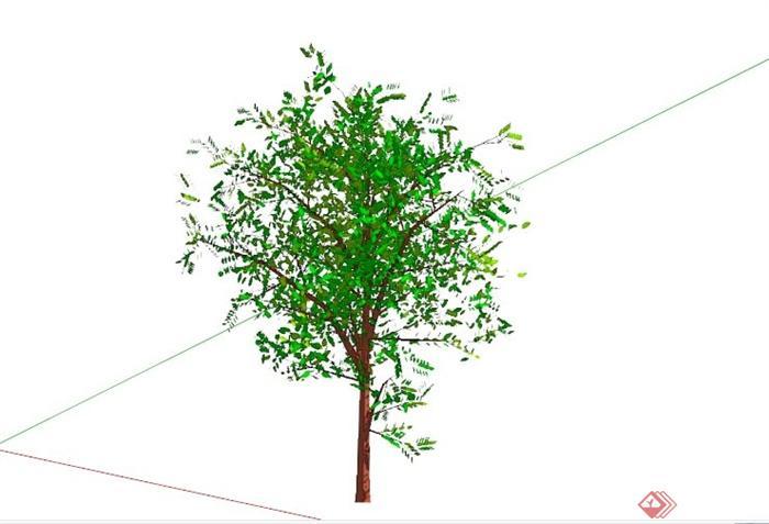 常见景观树植物SU模型库(4)