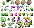 景观植物,植物素材