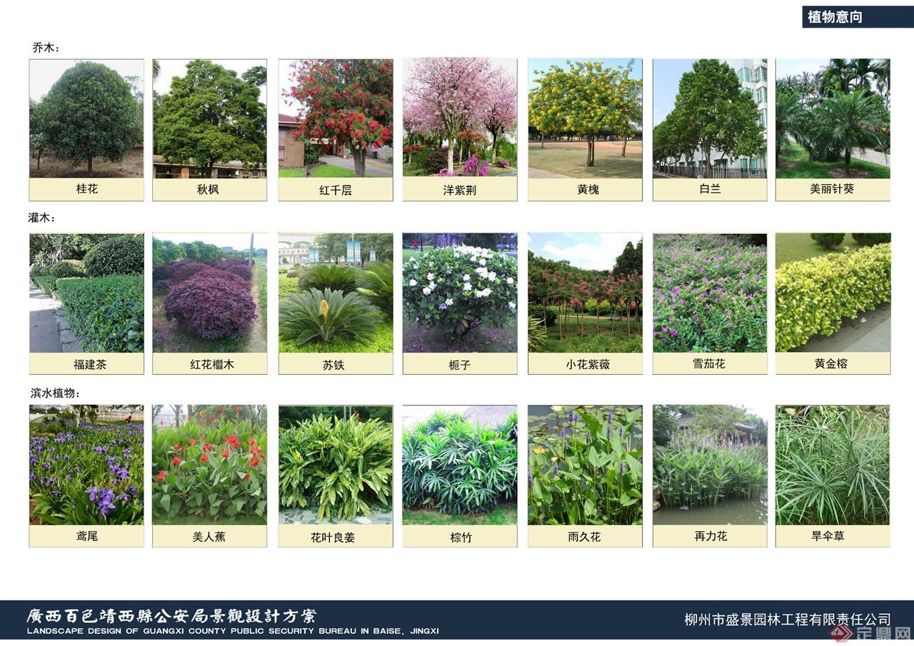 植物平面图素材种类