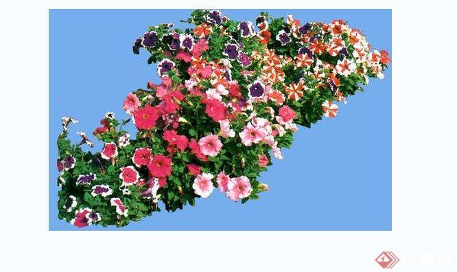 多张花卉植物景观ps素材[原创]