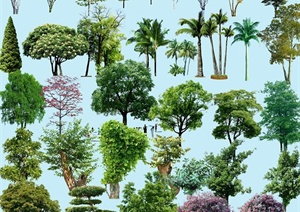 多种乔木psd植物素材
