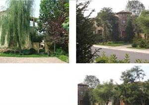 景观植物实景案例配置分析