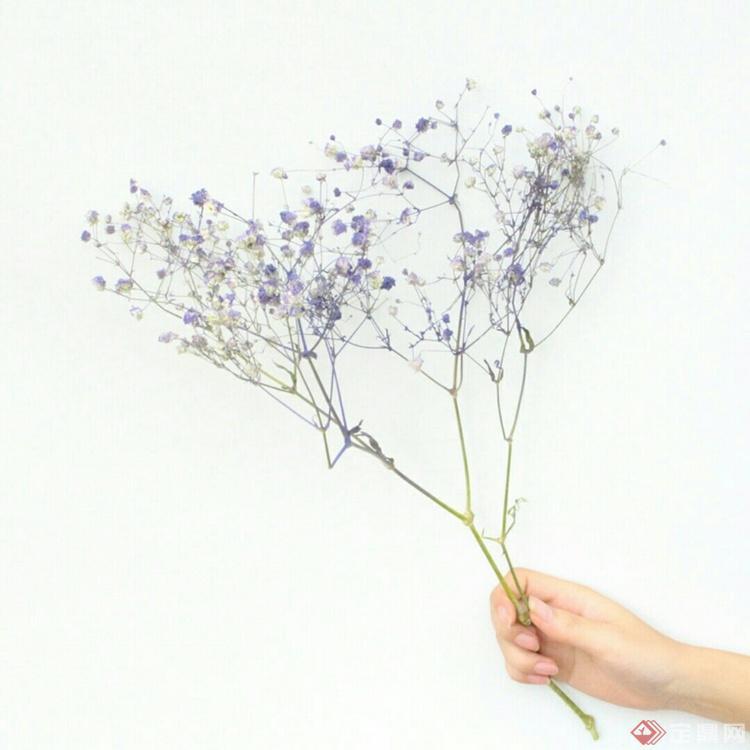 喜欢干花,喜欢那种沧桑之中透着美丽的独特韵味和那似有若无的幽香。虽然她散发不出鲜花的清香,也展现不了鲜花的娇艳和妩媚,但她那种怀旧的典雅忧郁的美却是永恒的。 我们平日摆放的鲜花许多都可以制成干花,尤其对我们有特殊意义的花束,制成干花后能保存更长时间。我们还可以买来鲜花花瓣,干燥后制成香袋,非常便宜。最简单、最自然的方法是把鲜花扎成束放在温暖干燥的地方让其变干。这就是我们通常说的风干。但有些花用这种风干方式会变形,甚至会变质。如果你想要花干得更长些地话,不妨用微波炉来帮忙。