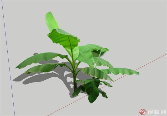 现代芭蕉植物素材设计su模型(1)