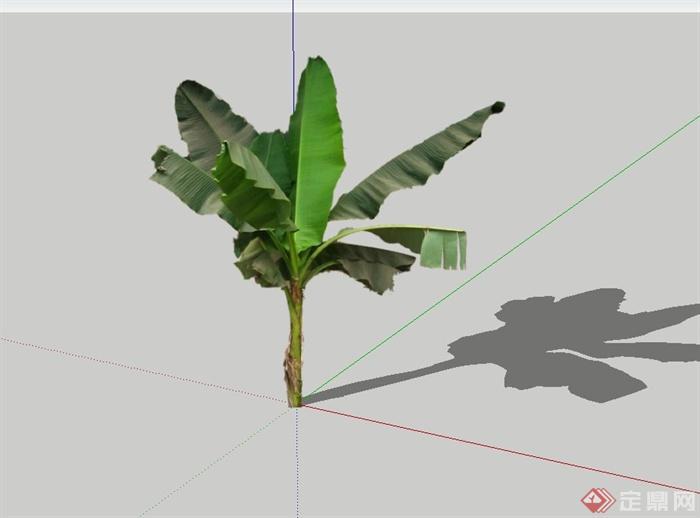 2d芭蕉树设计su模型(1)