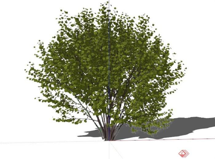 现代木槿植物素材设计su模型(1)