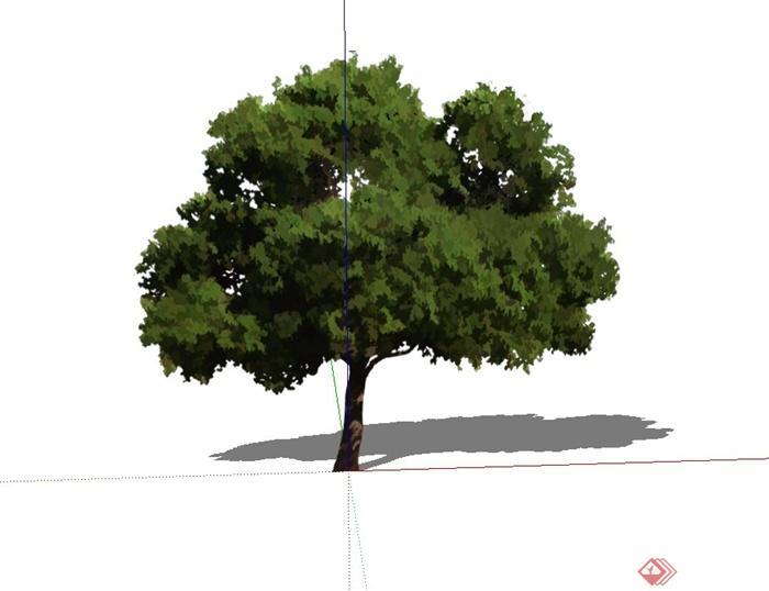 单棵2d法桐树木设计su模型[原创]