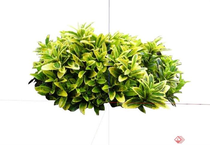 金边黄杨球植物素材设计su模型(1)