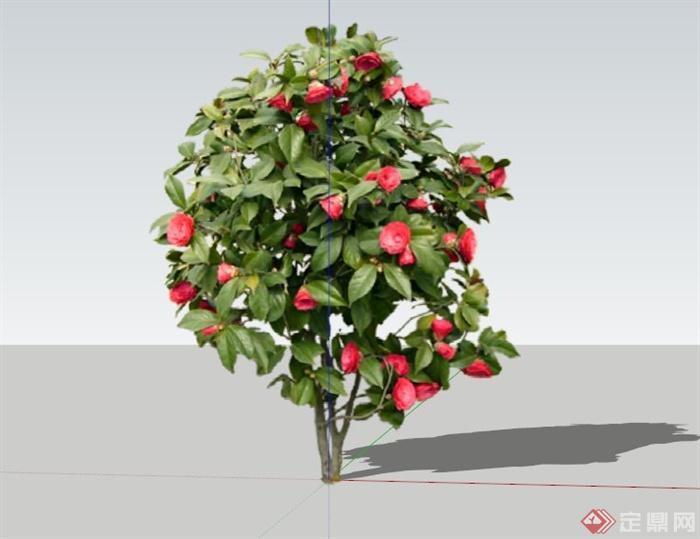 现代茶花树植物素材设计su模型[原创]