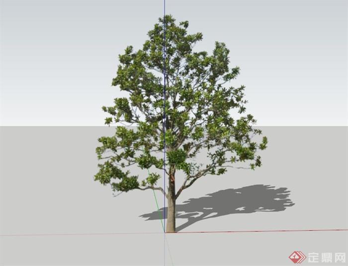 4种广玉兰树植物素材su模型(1)