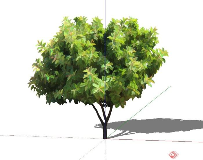 石楠石楠树树木植物植物素材景观植物