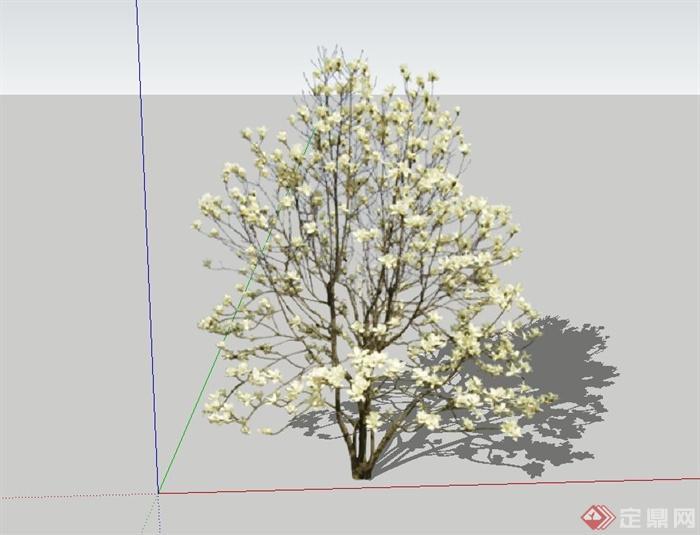 白玉蘭樹設計su模型(1)
