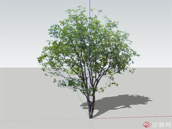现代桂花树植物素材设计su模型(1)