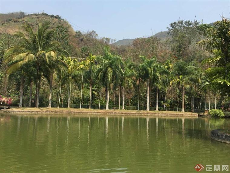 西双版纳有中国唯一的热带雨林自然保护区,气候温暖湿润,树木葱茏
