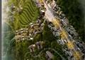 中式风格山地生态园区规划设计方案(43页)