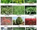 常绿灌木,常绿灌木植物,灌木