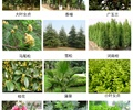 乔木,乔木植物,灌木,灌木植物