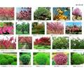 花卉植物,植物,灌木