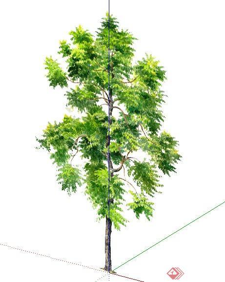 树木手绘植物su素材模型[原创]
