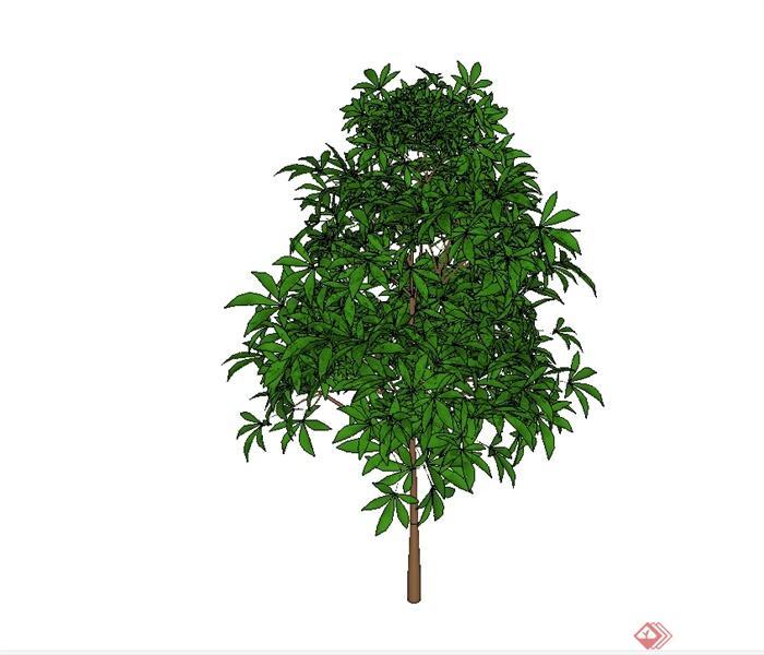 单棵详细的树木植物素材设计su模型[原创]