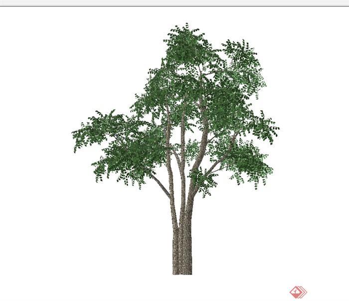 某经典树木素材设计su模型[原创]