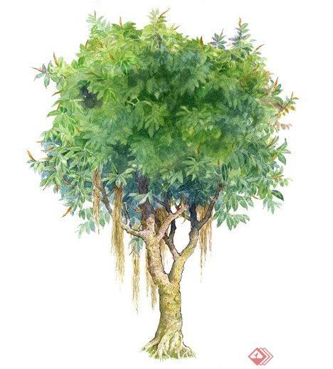 99棵手绘树植物素材jpg图片(1)
