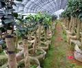 大棚,盆栽,盆栽植物