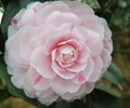 花朵,植物,植物素材