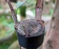 植物,植物素材
