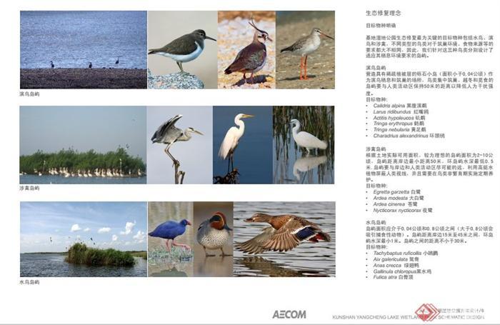 昆山阳澄湖湿地公园景观规划设计PDF方案(8)