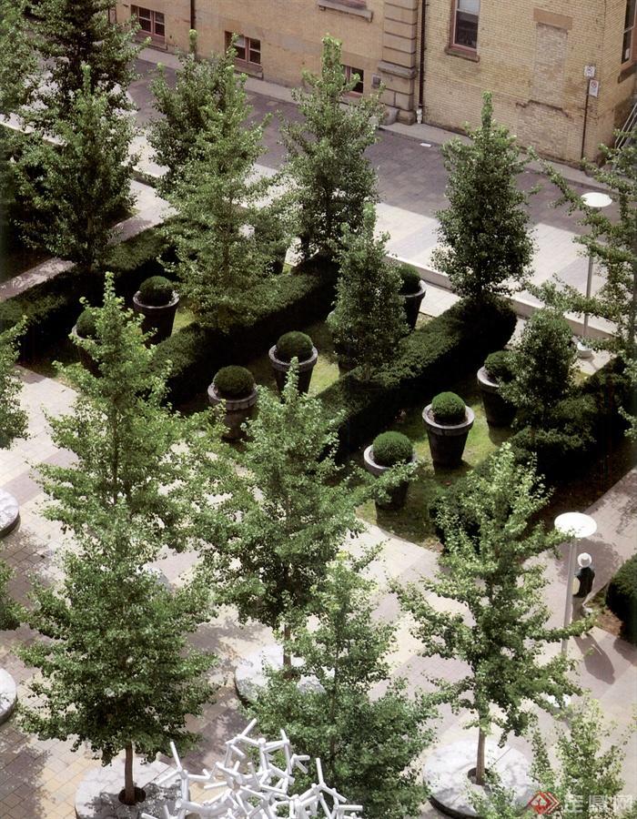 广场,广场景观,树坑,花钵,造型树